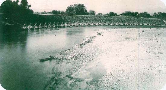 昭和28年前後施工 利根川護岸工事(福島橋上流左岸)